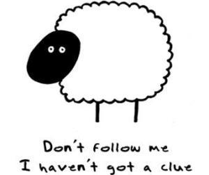 5380_funny-sheep